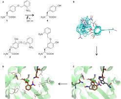 De Novo Enzyme Design Using Rosetta3 Pdf Computational Aminoacyl Trna Synthetase Library Design