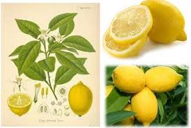fresh lemons and water make an excellent non toxic easy to make mosquito spray with a refreshing scent see the recipe here