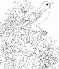 Free Printable Coloring Pages For Older Girls 2jpg Coloring Home