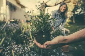 10 tips to enhance your gardening skill