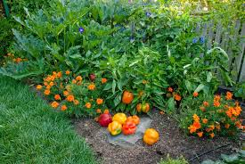 Small Picture Drought Strategies for Vegetable Gardening Seed Savers Exchange