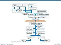 Venous Blood Flow Chart 31 Studious Venous Flow Chart