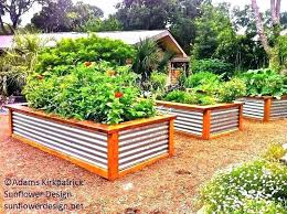 metal raised garden beds corrugated bed full image for