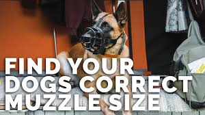 Baskerville Muzzle Size Chart How To Find Your Dogs Muzzle Size