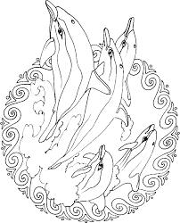 Mandala Kleurplaten Voor Volwassenen Dolfijn Traumfaenger Ausmalbild