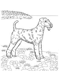 Small Picture 113 best favorite Dog Colouring pages images on Pinterest Dog