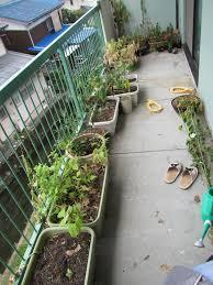 Balcony Kitchen Garden Soil En Route To Awesome