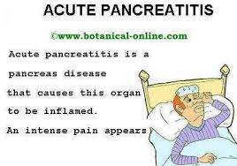 Plant Based Diet For Pancreatitis Botanical Online
