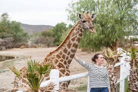 giraffe experience oudtsn
