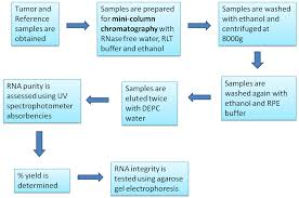 Rna Preparation Flow Chart Differential Gene Expression In