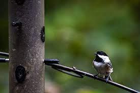 Eloise Butler Wildflower Garden and Bird Sanctuary - Minneapolis Park &  Recreation Board