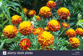 bright beautiful flowerses on background of the green herb in garden