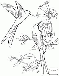 Small Picture birds hummingbirds Bee hummingbird hummingbirds coloring pages