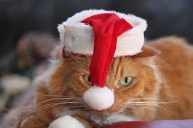 Image result for cats in santa hats