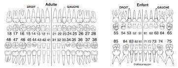 Odontogram Dental Numbering Fdi Notation Orthodontics
