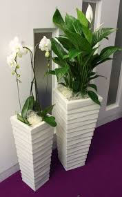 office plant displays. Beautiful Office Office Plant Pots 192 Best Plants Images On Pinterest  House Plants  Gardening And Displays K