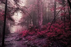 Bütünsel bir değişmeden orman Masaüstü Duvar Kağıtları, inanılmaz güzellik  ve kişilik zarar.