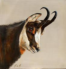 Small Picture 74 best Art chevreuils cerfs chamois mouflons images on