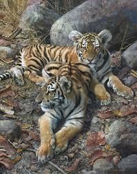 carl brenders endangered ambassadors tigers