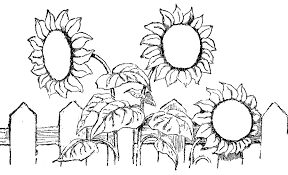 Small Picture Sunflower Coloring Sheet Sunflower Smiling Coloring Pages For