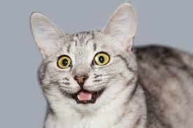 Die 9 Lustigsten Katzenwitze Watson