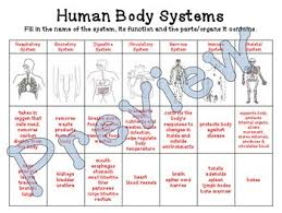 Body Systems Chart Human Body Systems Chart Function Parts