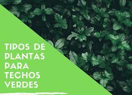 tipos de plantas para techos verdes