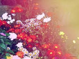 Cute Flower Wallpapers Tumblr ...