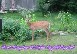 how to keep deer out of the vegetable garden