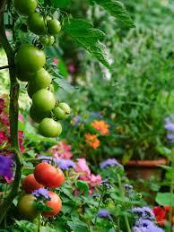 garden types landscaping outdoor rooms vegetable gardening fruit plants landscapes that work edible garden