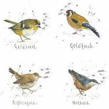 British Garden Birds Chart A4 British Garden Birds Poster Print Nature Wildlife Chart