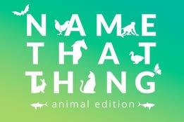 meshuga definition of meshuga by merriam webster that thing animal edition