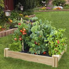 garden beds. economy 4x4 cedar raised bed garden beds