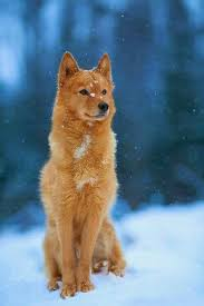 most beautiful dogs wallpapers. Contemporary Wallpapers Most Beautiful Dog Ever Intended Beautiful Dogs Wallpapers