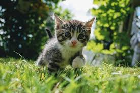 kitten development from 3 to 6 months