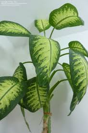 ... Home Design Shockings Of House Plants Inspirations About My On  Pinterest 87 Shocking Images ...
