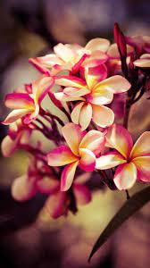 Huawei Flower Wallpapers - Top Free ...