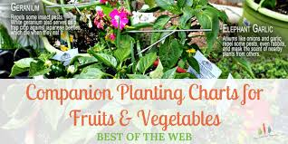 Vegetable Companion Planting Charts Companion Planting Charts For Vegetables Fruit Best Of The Web