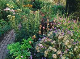 Small Picture Cottage Garden Plants HGTV