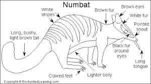 Small Picture Numbat Printout EnchantedLearningcom