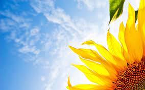 Sunflower Wallpaper Widescreen Is Cool ...