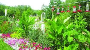 hummingbird garden. Contemporary Garden Hummingbird Garden Intended Garden O