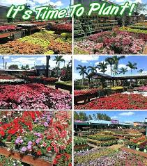 flamingo nursery davie flamingo road nursery annuals time to plant flamingo road nursery new slide flamingo flamingo nursery