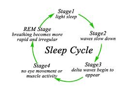 Rem Sleep Chart What Do Dogs Dream About Rem Sleep Sleep Cycle Chart
