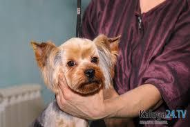 как украсить собаку к новому году в калуге