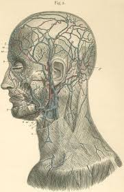 arteries of the face anatomy atlases atlas of human anatomy plate 17 figure 2