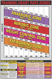 Cardio Training Zone Chart Heart Rate Training Zones Poster Laminated Heart Rate
