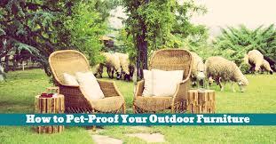 how to pet proof your outdoor furniture hooligans