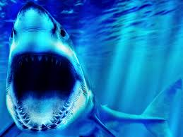 shark wallpaper 3d.  Shark Preview U0026 Save Wallpaper Intended Shark 3d O