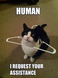 funniest appropriate animal memes - Google Search   Funny Quotes ... via Relatably.com
